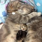 Cats Agape Love photo
