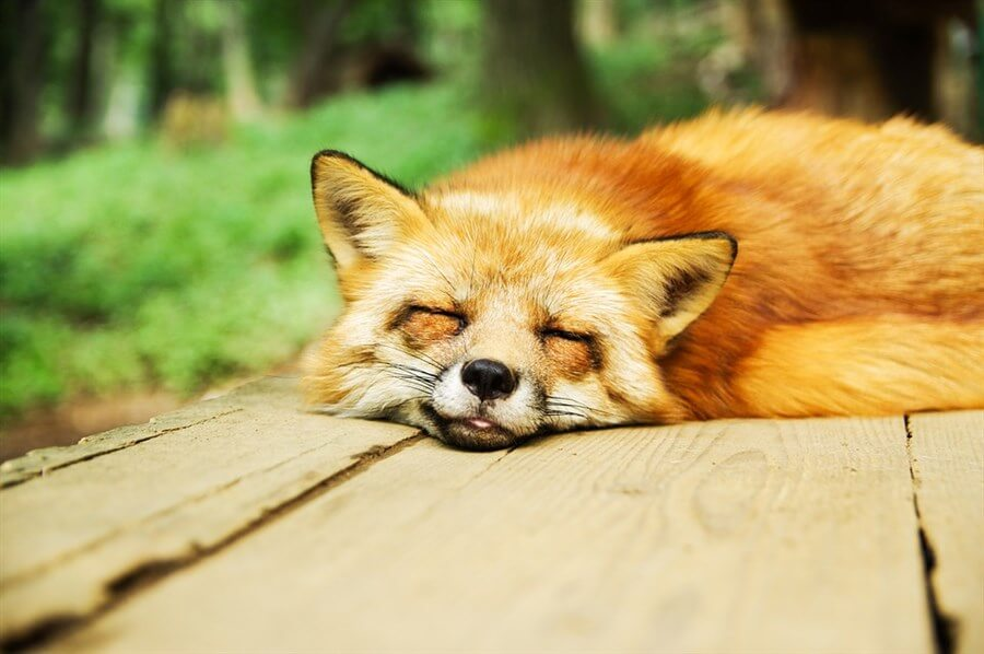 sleep-deprivation-experiment