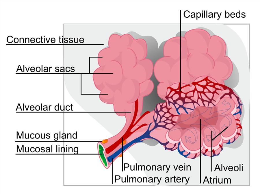 dyspnea treatment