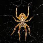 Arachnophobia Hypnosis Therapy